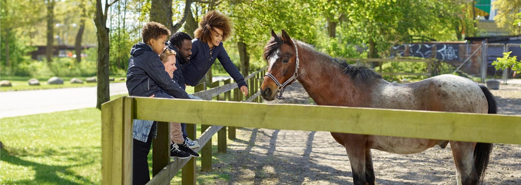 Familie hilser på hest i Brøndbyøster